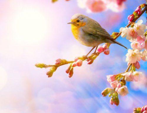 Nel Benschop – Toch wordt het lente